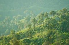 与森林的小山 免版税库存图片