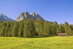与森林的峰顶 免版税图库摄影