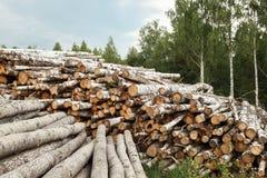 与森林的木日志背景的 库存照片