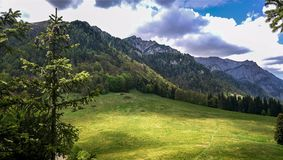 与森林的自然风景 免版税库存照片