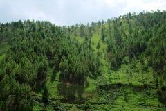 与森林的青山 免版税图库摄影