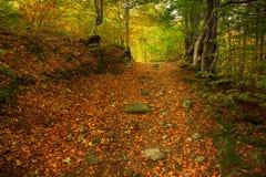 与森林足迹的不可思议的早晨森林风景 库存图片