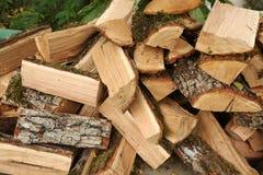 与森林青苔的被锯的橡木 免版税库存图片
