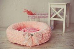 与椅子的桃红色宠物床垫在屋子里 免版税库存照片