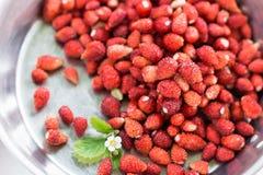 与植物叶子和开花的野草莓在银套色板,健康吃概念 免版税库存图片