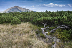 与植物和山的秋天风景 图库摄影