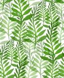 与植物和蕨的无缝的纹理 库存图片