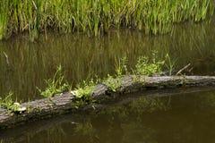 与植物生长的日志 免版税图库摄影