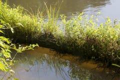 与植物生长的日志 库存照片