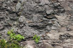 与植物的一个老被风化的岩石镇压的 免版税图库摄影