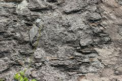 与植物的一个老被风化的岩石镇压的 库存照片