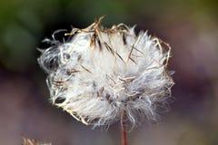 与植物的一朵美丽的花在Graden 库存照片