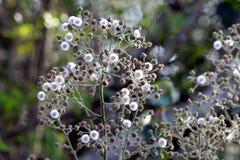 与植物的一朵美丽的花在Graden 免版税图库摄影