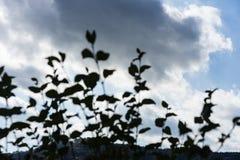 与植物的剧烈的多云天空前景的 图库摄影