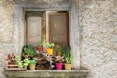 与植物的土气窗口 免版税图库摄影