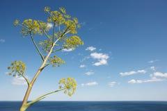 与植物的地中海海岸线风景在阿利坎特 西班牙 免版税库存照片