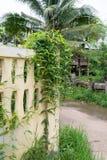 与植物的墙壁背景 免版税库存照片