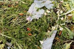 与植物的天然肥料堆保持。 免版税库存照片