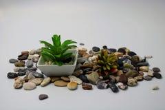 与植物的小花盆 库存图片