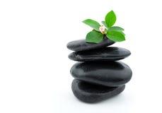 与植物的平衡的温泉石头 免版税图库摄影
