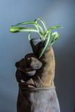 与植物的手套 图库摄影