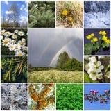 与植物的拼贴画 免版税库存图片
