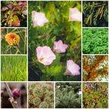 与植物的拼贴画 免版税图库摄影