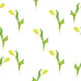 与植物的无缝的背景 与郁金香的水彩样式在白色背景 库存照片