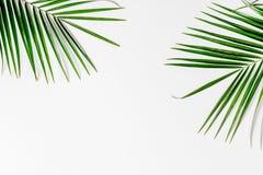 与植物的现代春天设计白色背景顶视图大模型的 库存图片