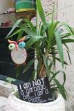 与植物的疯狂的猫头鹰 免版税库存照片