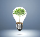 与植物的白炽光电灯泡 库存照片
