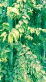 与植物的自然 库存照片