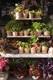 与植物的花店罐的 ?? 免版税库存图片