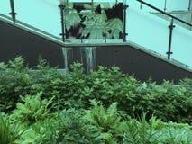 与植物的都市具体风景 图库摄影
