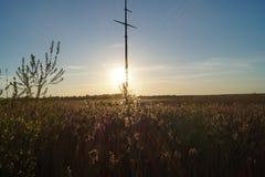 与植物的领域的日落风景 免版税图库摄影