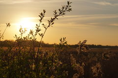 与植物的领域的日落风景 免版税库存照片