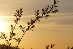 与植物的领域的日落风景 免版税库存图片