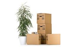 与植物的移动的纸盒箱子堆 免版税库存照片