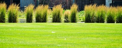 与植物的绿草 库存照片