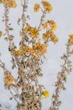 与植物花的冬景花园 免版税库存照片