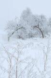 与植物花的冬景花园 库存照片