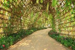 与植物隧道的路 免版税库存图片