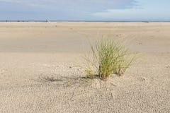 与植物滨草草的海滩 免版税库存照片