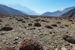 与植被海岛的山石高原  免版税库存图片
