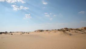 与植被的沙丘在沙漠 影视素材