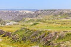 与植被的沙漠倾斜在春天 免版税库存照片