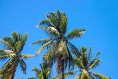 与椰子树树的天堂风景 与热带树剪影的异乎寻常的地方视图 免版税库存照片