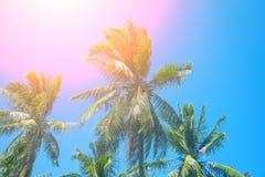 与椰子树树的天堂风景 与热带树剪影的异乎寻常的地方视图 免版税库存图片