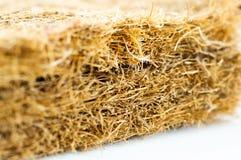 与椰子须根的床垫 椰子粗硬纤维 床垫的生产的被磨碎的椰子壳 纹理,自然本底 库存图片