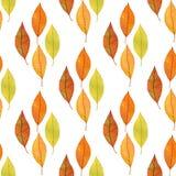 与概略无缝的样式的秋叶背景 秋季自然题材设计 库存图片